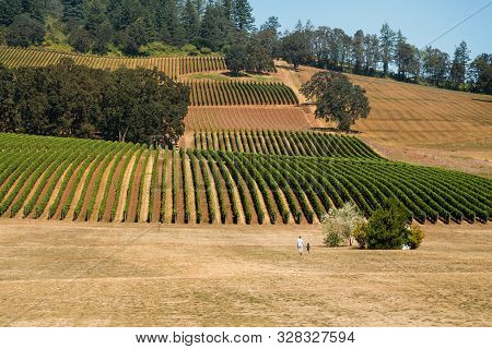 A Father And Son Walking Near Rows Of Wine Grapes At A Willamette Valley Winery.