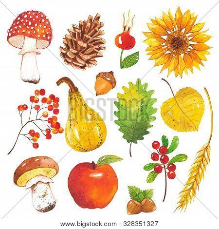 Watercolor Hand-drawn Set Of Autumn Harvest. Autumn Mushroom, Leaf, Pine Cone, Pumpkin, Acorn, Cranb