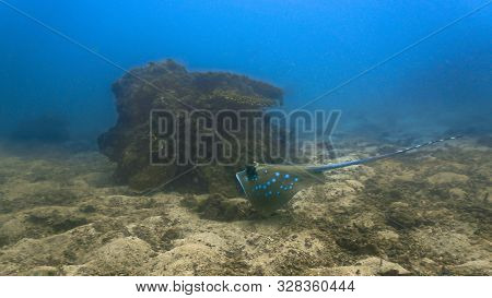 Underwaterphoto Of A Bluespotted Stingray From A Scuba Dive Off The Coast Of Krabi - Aonang In Thail