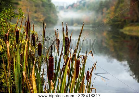 Fogy autumn morning with nature colors