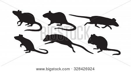 Vector Flat Black Set Bundle Of Rat Mouse Silhouette Isolated On White Background
