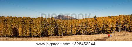 Landscape Of Beautiful Aspen Trees In The Fall