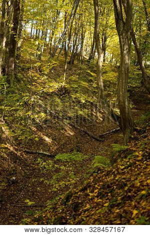 Bottom Of A Gully Landform Inside Of A Forest