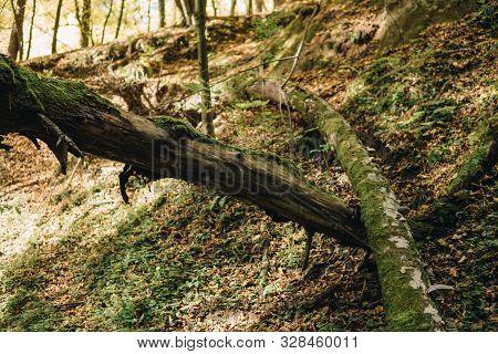 Bottom Of A Gully Landform