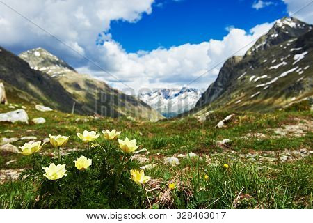 Vernal flowers on highland meadow. mountains landscape in spring.
