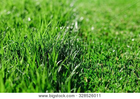 Green Fresh Grass. Partially Cut Grass Lawn. Difference Between Perfectly Mowed, Trimmed Garden Lawn
