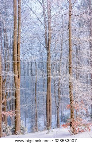 Forest In Hoarfrost. Beautiful Winter Scenery In The Morning. Magical Misty Weather