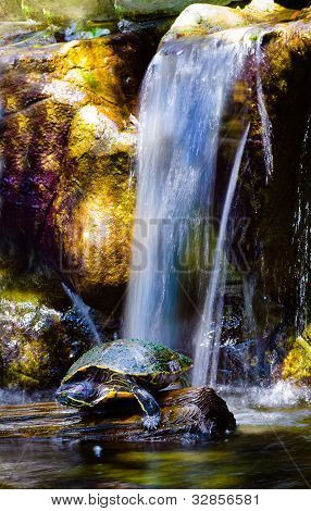 Box turtle sunning under waterfall from small creek poster