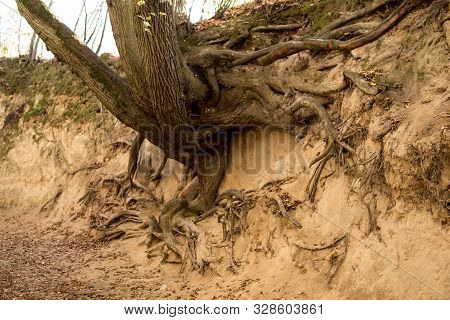 Roots Of Trees Inside Of A Gully