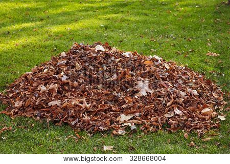 Fall Leaf Clean-up. A Pile Of Fallen Leaves On The Lawn. Territory Cleaning.