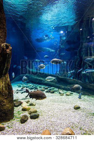 Moscow - April 2, 2018: Fish In Beautiful Blue Aquarium. Vertical View Of Large Aquarium. Underwater