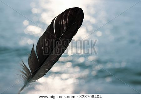 Tender Photo Of Dark Feather On Blue Wavy Water And Sunlights Background. Calm Summer Travel Image W