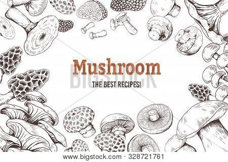 Mushroom Sketch Background. Organic Food Sketch With Shiitake Champignon Truffle And Oyster Mushroom