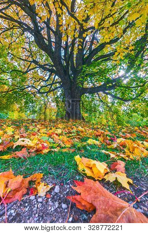 Autumn Landscape Under Mapple Tree. Colorful Foliage In The Fall Park.
