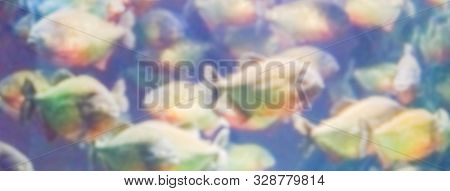 Defocused Background With A Flock Of Piranhas. Intentionally Blurred Post Production For Bokeh Effec