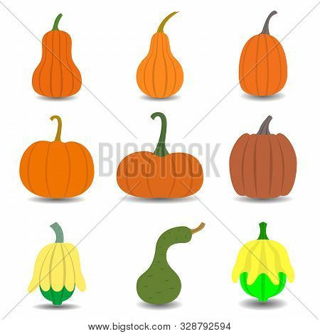 Set Of Pumpkin Icon Isolated On White Background. Different Shapes And Sizes Gourd. Vector Illustrat