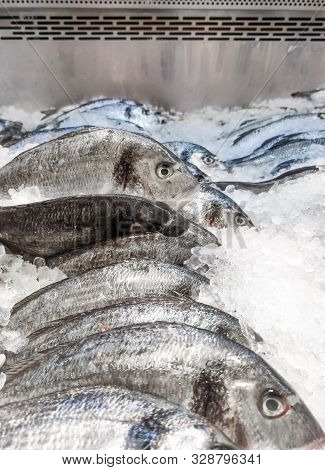 Sea Bream Sparus Aurata On Ice At The Seafood Booth. Dorada Fish Or Gilt-head Bream On Ice Backgroun