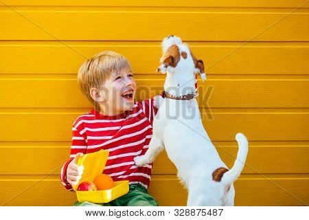 Cute Blond School Age Boy With Lunch Box Feeding Treats To His Hungry Puppy Dog Jack Russell Terrier