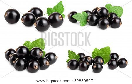 Set Or Collection Black Currant With Leaf Isolated On White Background