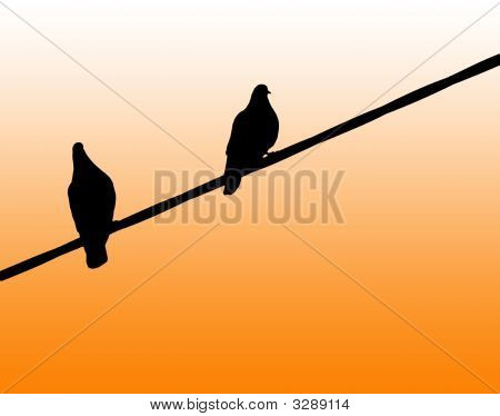 Pigeons Silhouette On Clean Orange Background