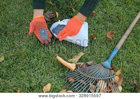The Gardener Holds A Granular Fertilizer In His Hands Next To A Fan Rake And Autumn Leaves Against A