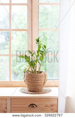 Concept Of Home Gardening. Zamioculcas In Flowerpot On Windowsill. Home Plants On The Windowsill.  G
