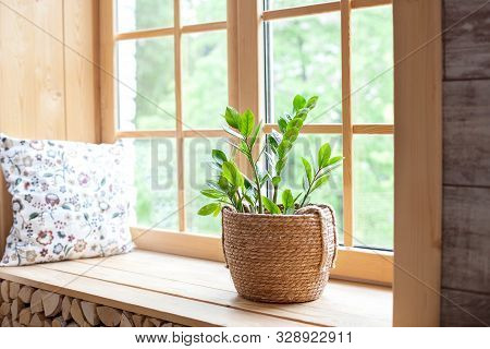 Zamioculcas Home Plant In A Straw Pot On A Windowsill. Comfort. The Decor Of The Room. The Concept O