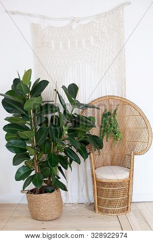 Peacock Wicker Rattan Chair In Living Room With Bohemian Decorations And A Large Ficus In A Straw Po