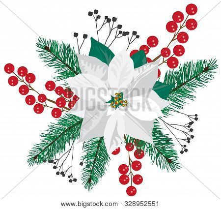 Vector White Poinsettia With Fir Tree Branches.