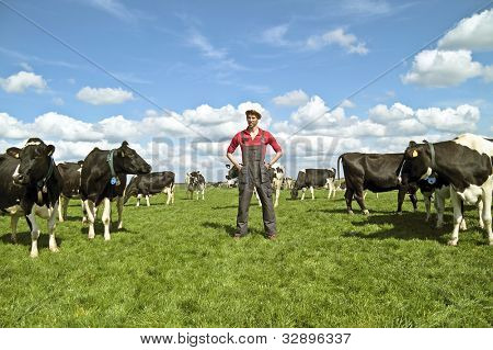 Young dutch farmer with his cows in the countryside poster
