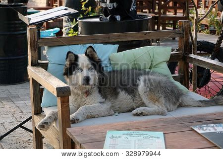 A Large Shaggy Dog ​​lies On A Wooden Bench In A Street Cafe. Funny Shaggy Visitor Of A Street Cafe.