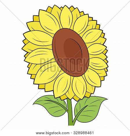 Illustration Of A Beautiful Sunflower On A White Background