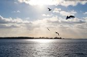 seagulls fly over lake ontario, the sun glinting off the water through the clouds. poster