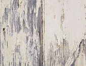 Weathered paint peels off wooden boards in detail poster