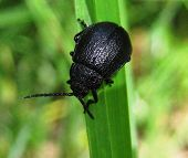 Black beetle sitting on green grass in sunny day poster