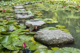 Lily Pond With Stepping Stones In Terra Nostra Botanical Garden, Furnas, Sao Miguel, Azores