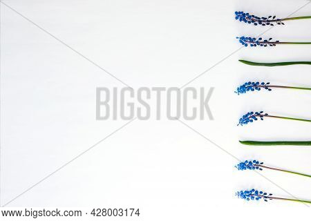 Postcard Layout. Flat Lay, Top View. Small Bouquet Of Blue Hyacinths And Copy Space For Text. Greeti