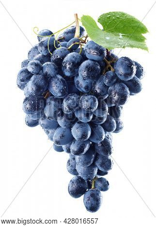 Bunch of blue grapes in water drops with a grape leaf isolated on a white background.