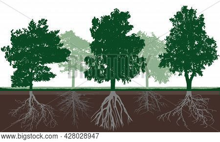 Silhouette Of Different Deciduous Trees With Green Crown And Root System In Soil. Root Structure Bel