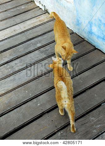 Ginger Cat Kissing