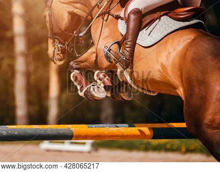 A Rear View Of A Strong Beautiful Racehorse With A Rider In The Saddle, Jumping Over A High Barrier