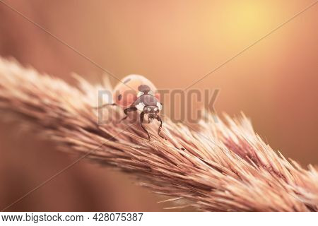 Concept Of Calmness, Tranquility And Harmony. Sunlit Ladybug Insect On Bright Sun. Warm Photo Filter