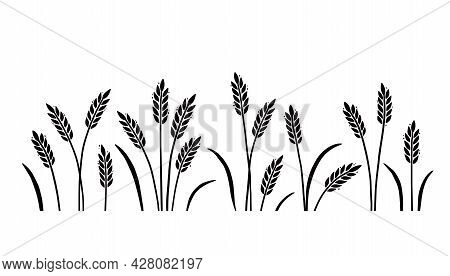 Wheat, Barley, Field Background For Oat, Cereal. Hand Drawn Sketch Style Oat With Grain. Wheat Vecto