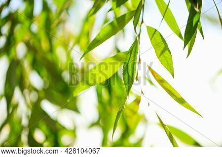 Defocused Scene With Fresh Foliage And Blue Skies, Ideal For Nature Backdrop With Vibrant Vibrant Co