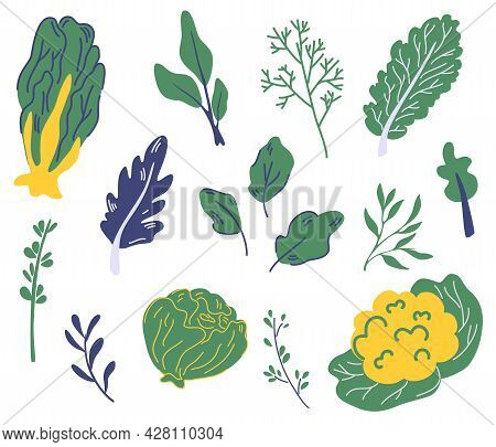 Set Of Salad Greens. Different Types Of Salad. Lettuce, Watercress, Kale, Spinach. Green Lettuce Sal