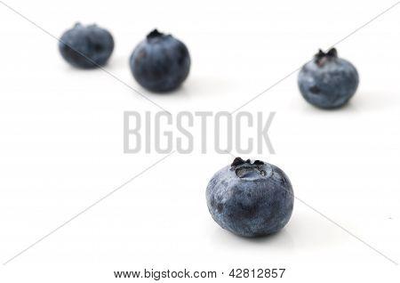 Macro Blueberry