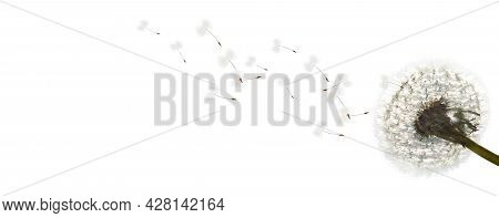 Beautiful Sommer Flowers In The Wind On White Background