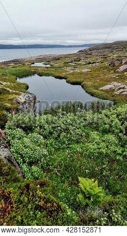 Tundra Landscapes. Natural Vivid Background With Wild Nature. Natura Wallpaper.