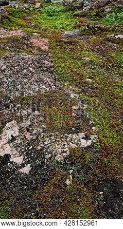Natural Vivid Background With Wild Nature. Natura Wallpaper. Tundra Swamp Soil Landscape Of Polar Su