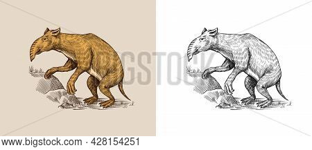 Palorchestes. Marsupials Of The Family Palorchestidae. Vintage Extinct Animal. Retro Mammals. Hand D